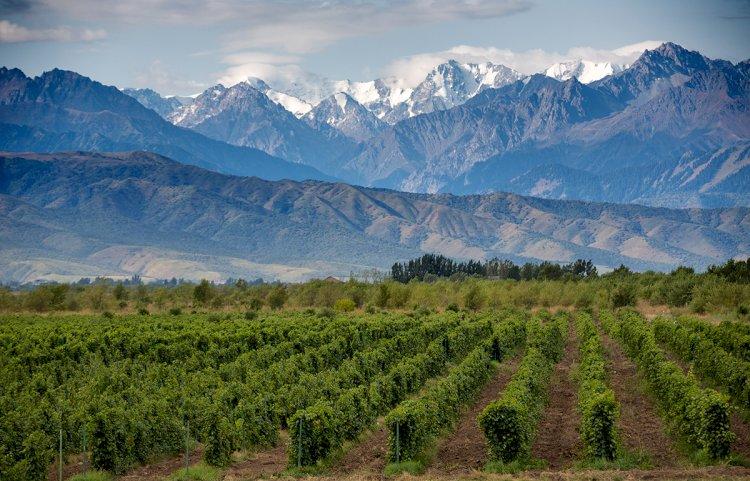 Необычные винодельческие регионы Аргентины#Aliantavin